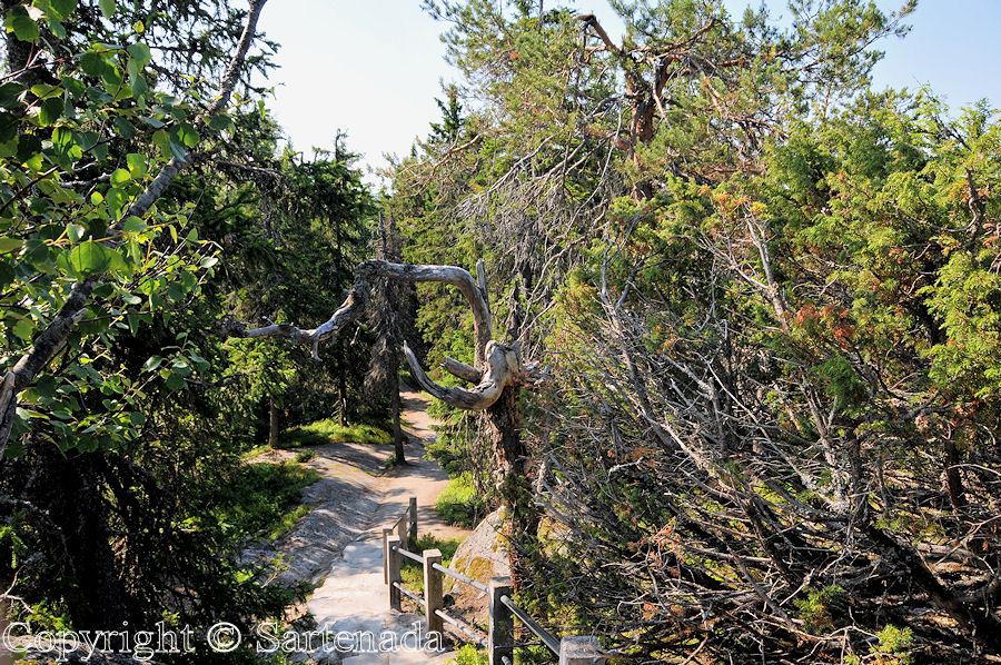 Koli - National park / Parque nacional / Parc national