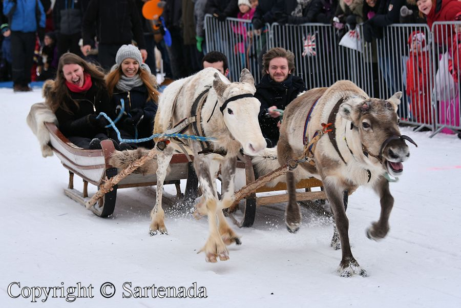Reindeer driving competition in Oulu, Finland