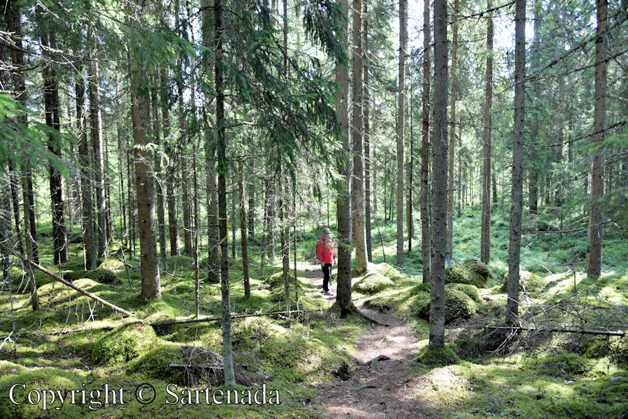 Finnish forests are beautiful to walk. Photo from Otava, FinlandFinnish forests are beautiful to walk. Photo from Otava, Finland