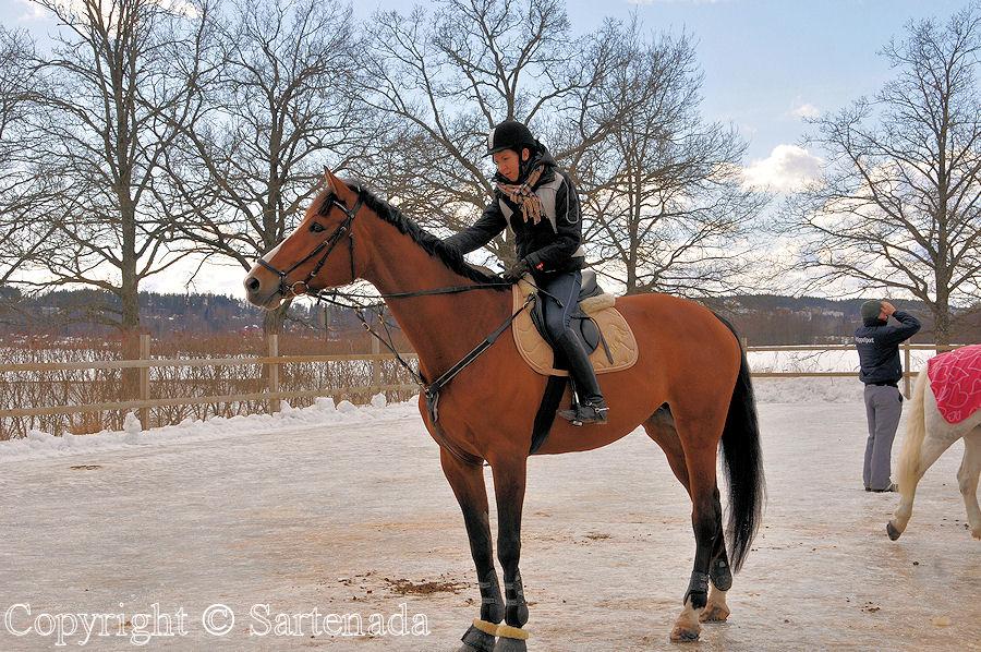 Equitation / Equitación