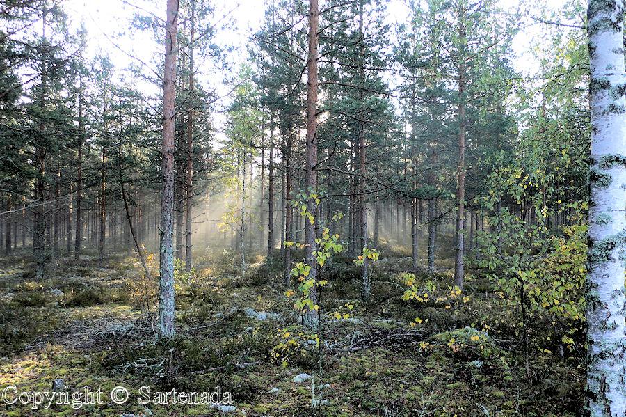 My nearby environment / Mi entorno vecino / Mon environnement voisin