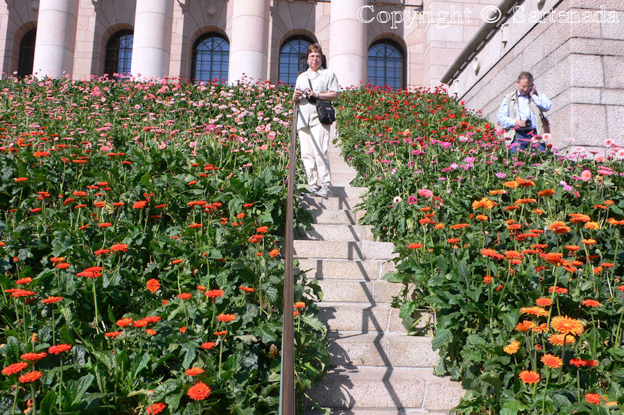 Tourist and 60 000 Gerberas