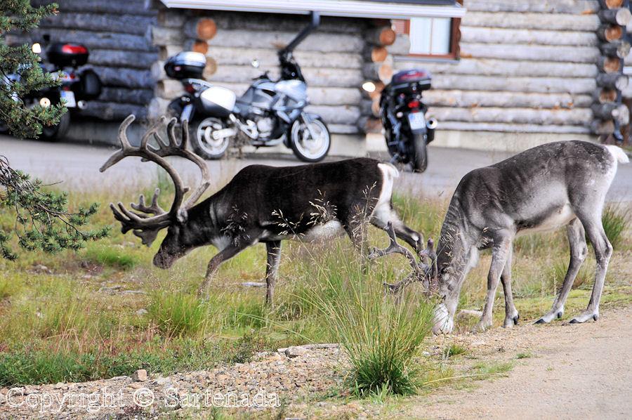 Beyond the Arctic Circle12 / Más allá del Círculo Polar Ártico12 / Au-delà du Cercle arctique12