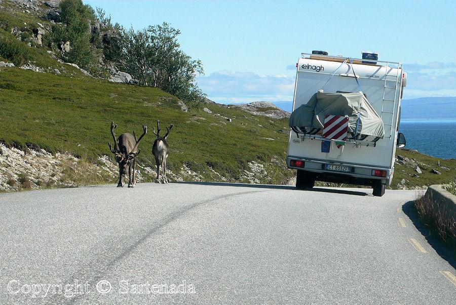 Road trip to Nordkapp (North Cape) / Viaje en carro al Cabo Norte / Cap Nord en voiture