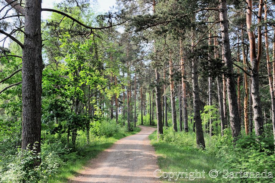 Kaihu nature Path / Sendero Natural / Sentier Nature