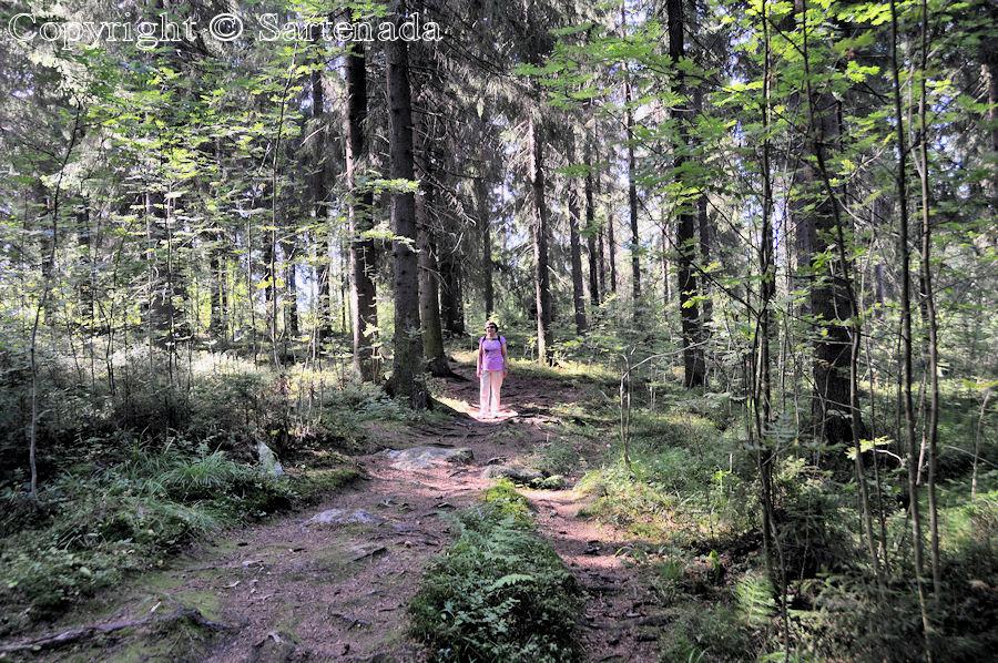 Suojalampi nature path