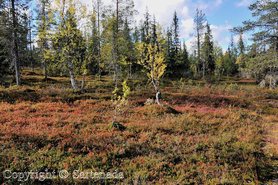 North of Arctic Circle4 / Al norte del Círculo polar ártico4 / Au nord du Cercle Arctique4 /  Ao norte do Círculo Polar Ártico4