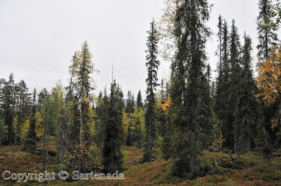North of Arctic Circle8 / Al norte del Círculo polar ártico 8/ Au nord du Cercle Arctique 8/ Ao norte do Círculo Polar Ártico8