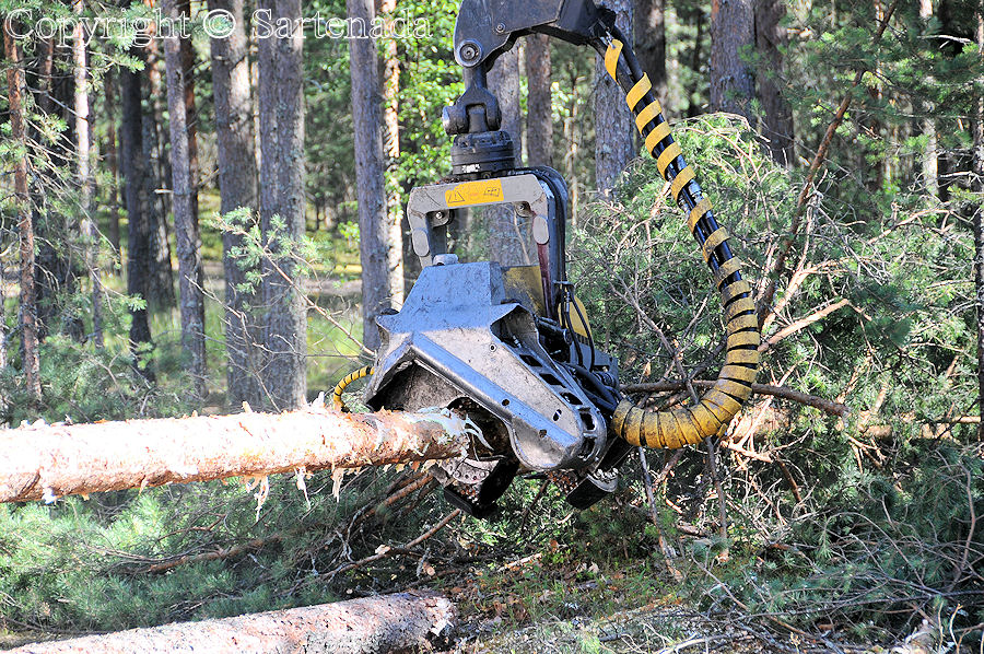 Forestry Harvester in work / Cosechadora forestal en el trabajo / Abatteuse dans le travail / Cosechadora forestal no trabalho
