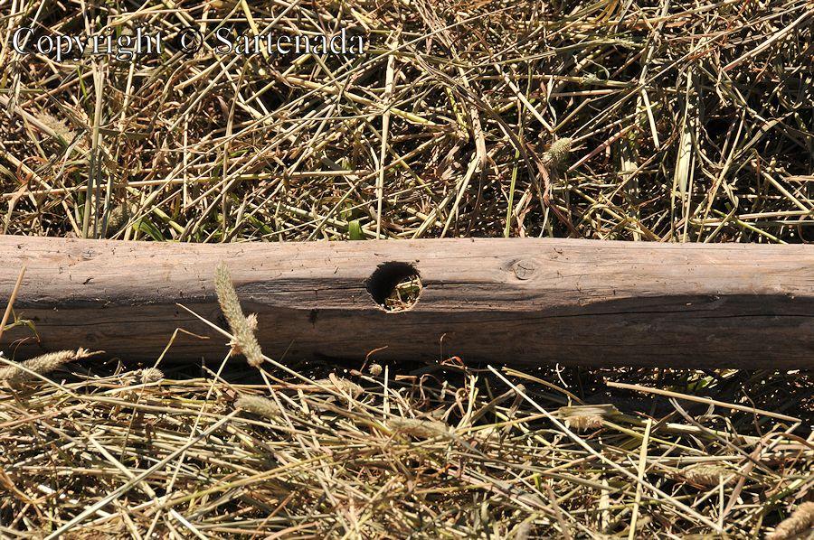 Haymaking  / Henificación / Fenaison / Fenação