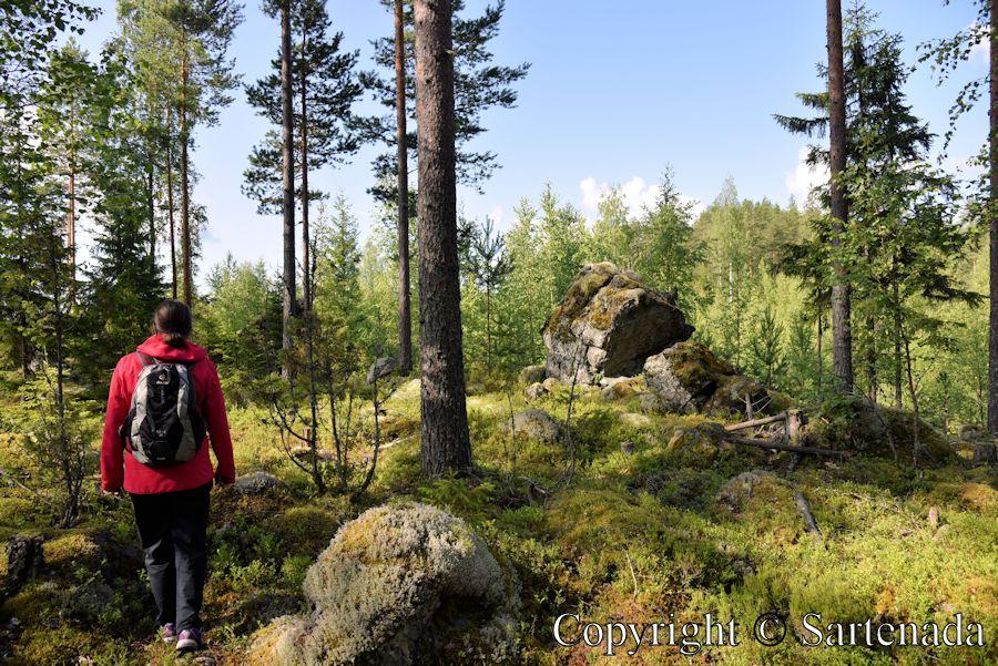 Forest walk / Caminata en el bosque / Balade en forêt / Caminhada na floresta