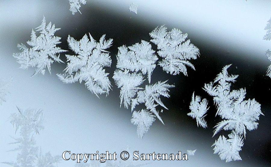 Ice crystals / Cristales de hielo  /Cristaux de glace  / Cristais de gelo