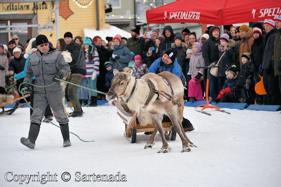 Reindeer driving competition / Competición de conducción de renos / Compétition de conduit de rennes / Competição da condução da rena