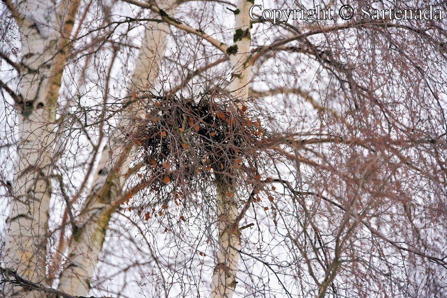 Wind's nest / Nido de viento / Nid du vent / Ninho do vento