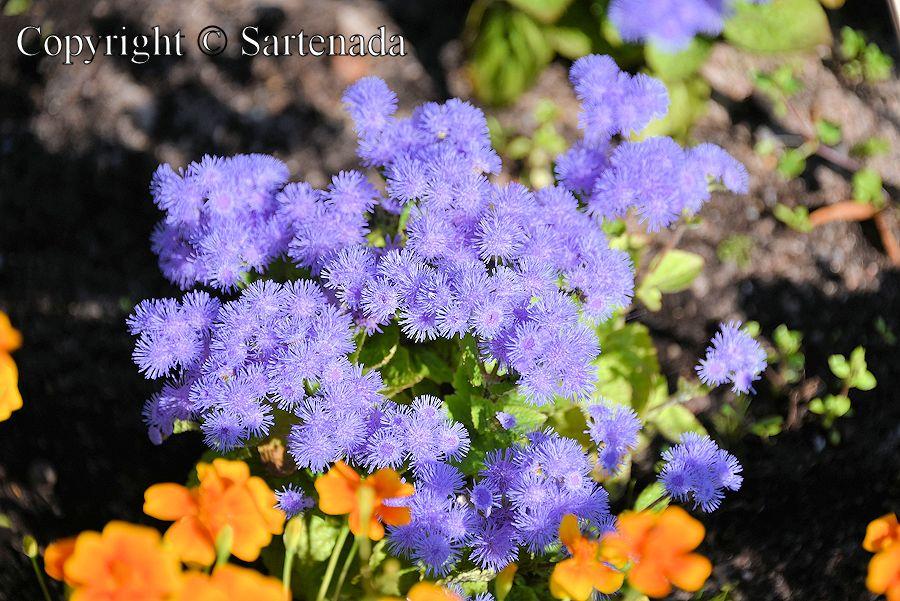 Flowers in the botanical Gardens of University