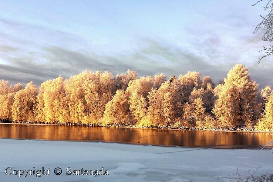 Golden tres / árboles de oro / arbres dorés / árvores douradas