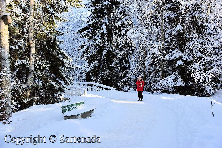White bridges in winter / Puentes blancos en invierno / Ponts Blanc en hiver / Pontes brancas no inverno