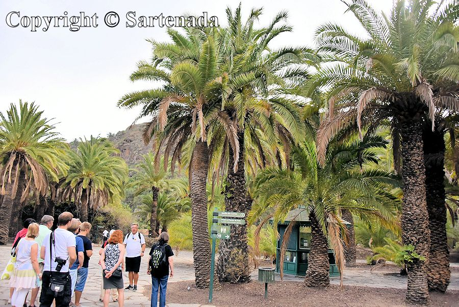12. Canary Islands Botanical Garden