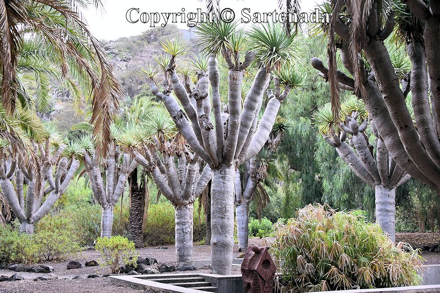 13. Canary Islands Botanical Garden