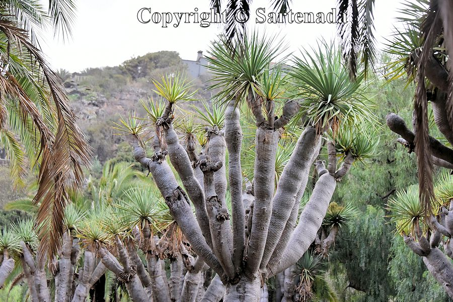 14. Canary Islands Botanical Garden