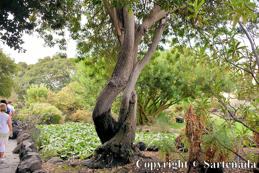 17. Canary Islands Botanical Garden