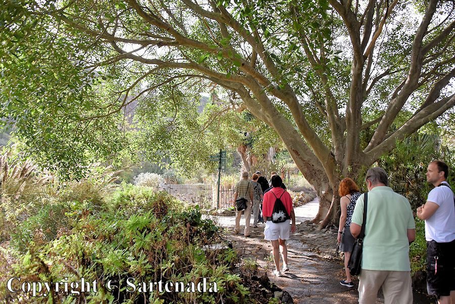 21. Canary Islands Botanical Garden