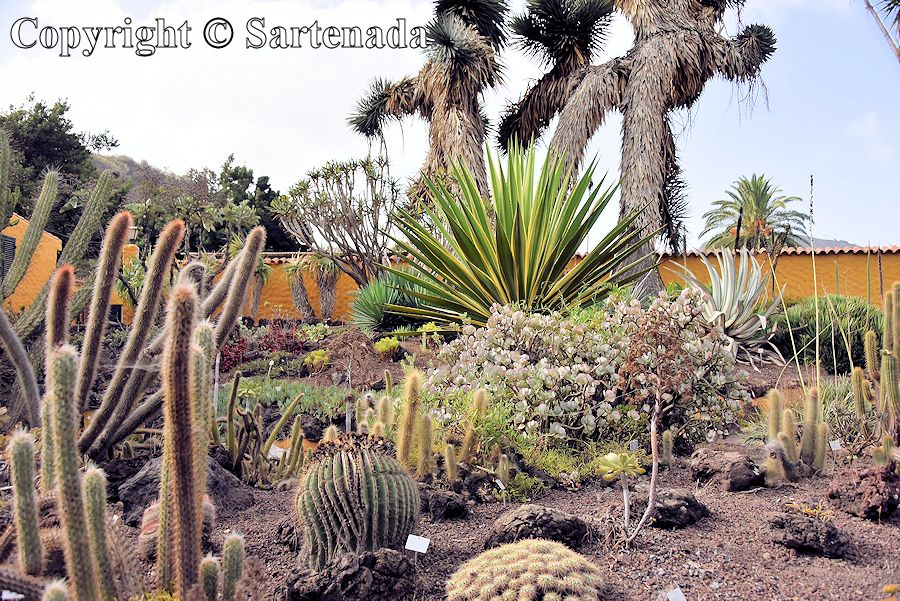 26. Canary Islands Botanical Garden