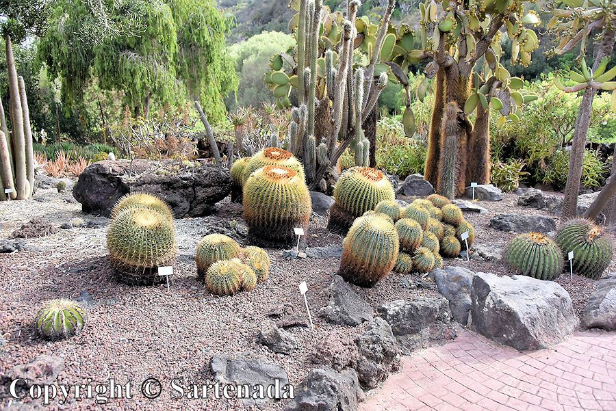 27. Canary Islands Botanical Garden
