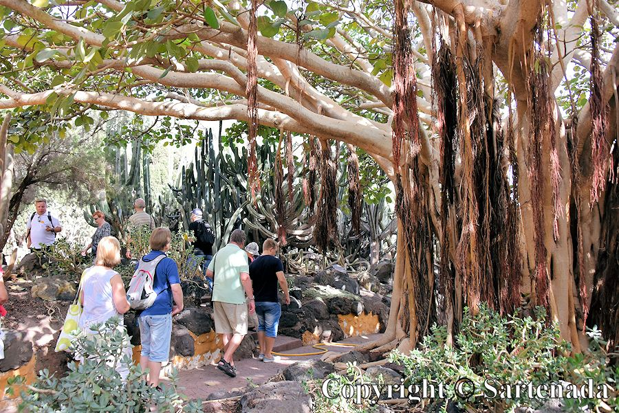 30. Canary Islands Botanical Garden