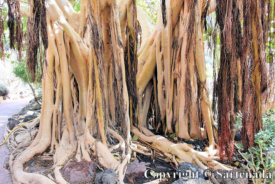31. Canary Islands Botanical Garden