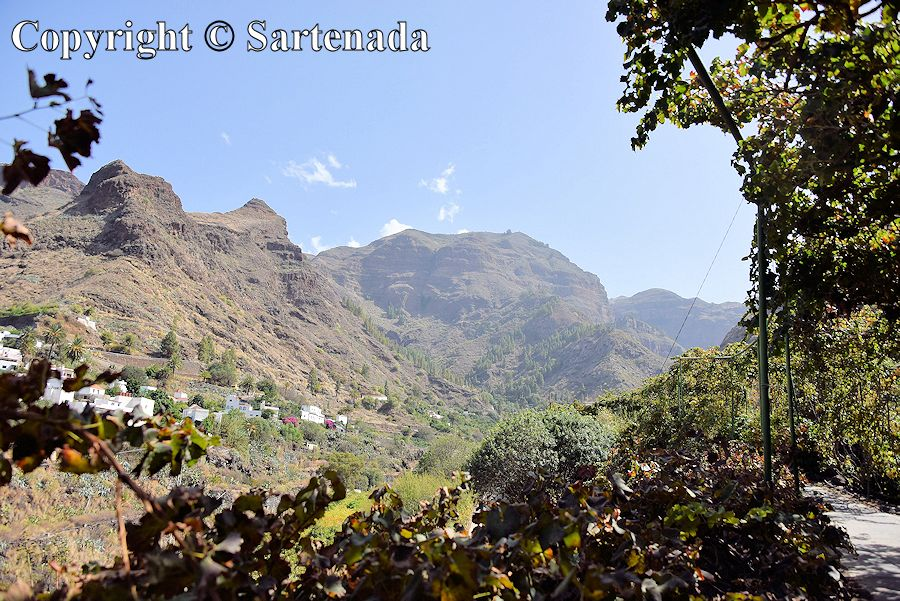 44. Photos from coffee plantation and its surroundings