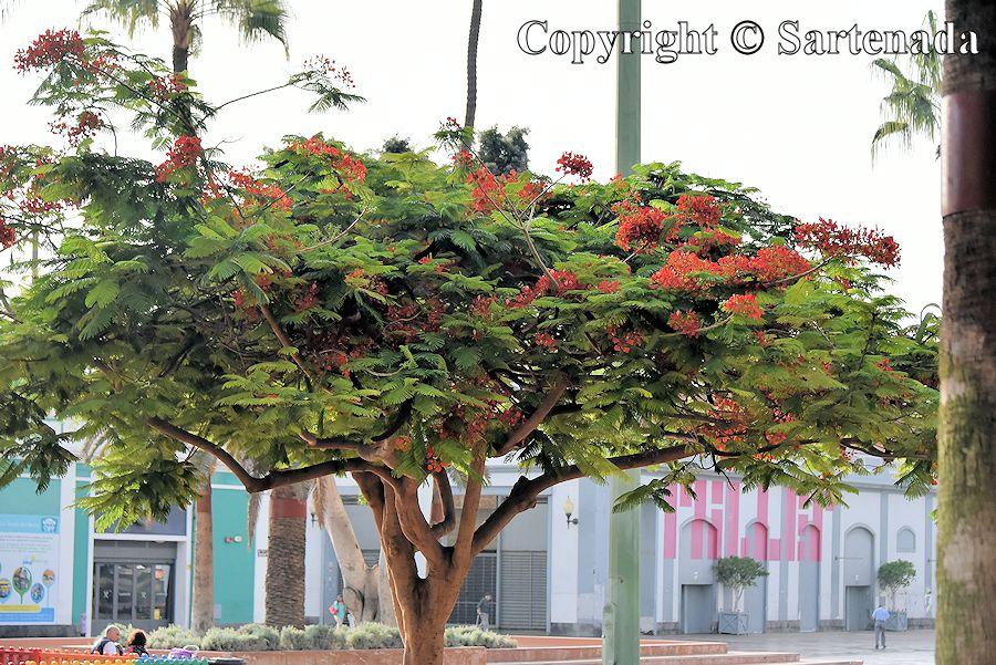 7. Tree in Santa Catalina Park