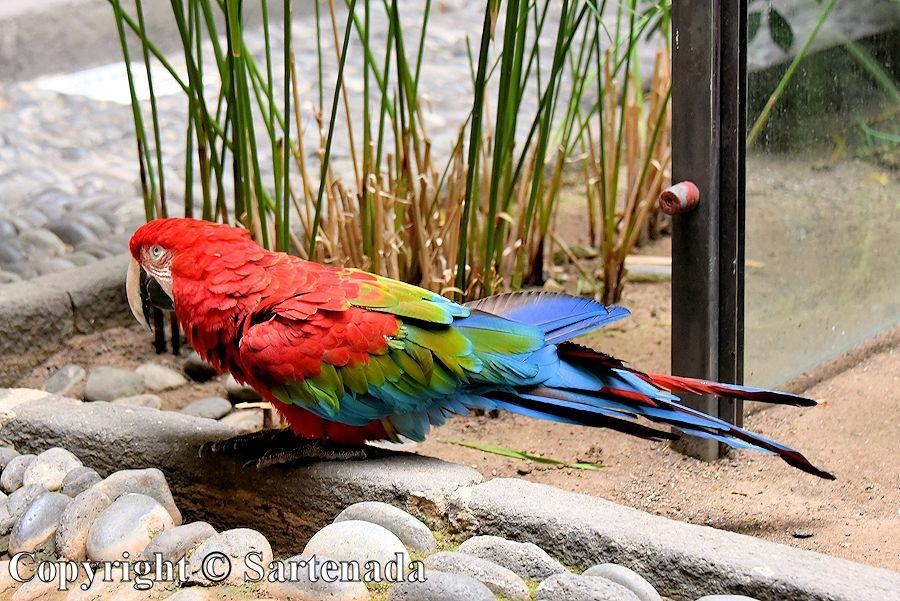 19. Parrot in Columbus's museum