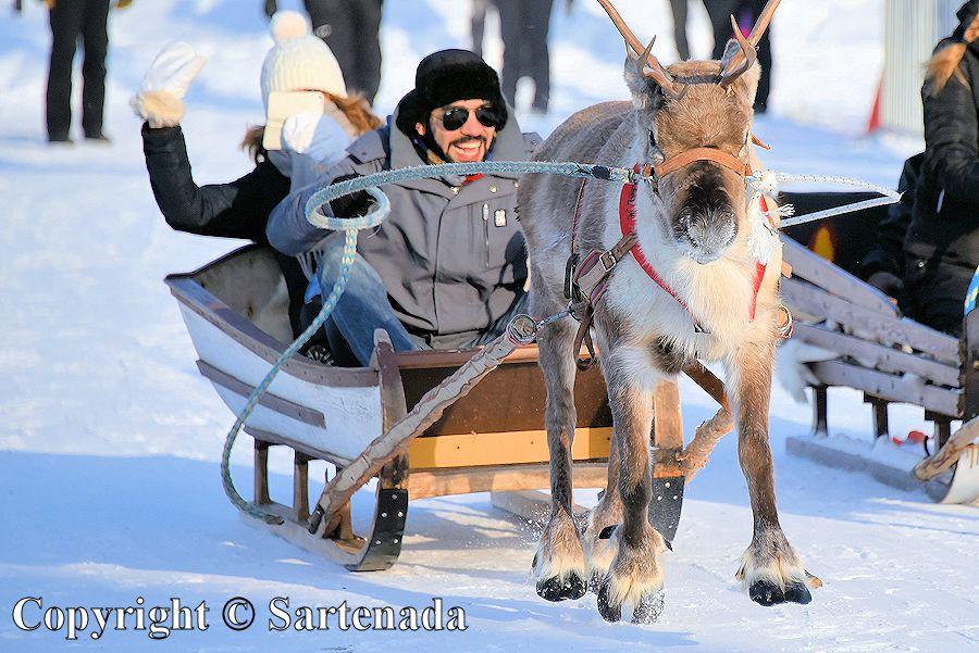 Reindeer race / Carrera de renos /  Course de rennes  / Competição de renas