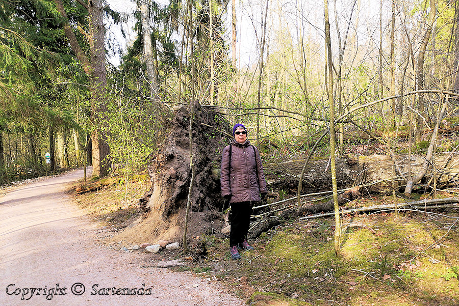 Nature trails Espoo