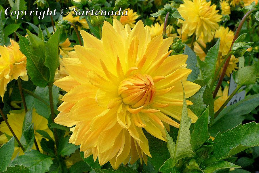 Mainau - flower island / Mainau - isla de flores / Mainau - île aux fleurs / Mainau-  ilha das flores